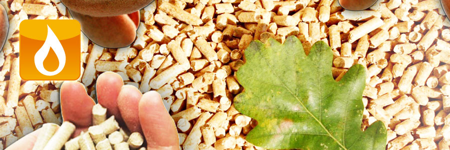 Caldeiras Biomassa